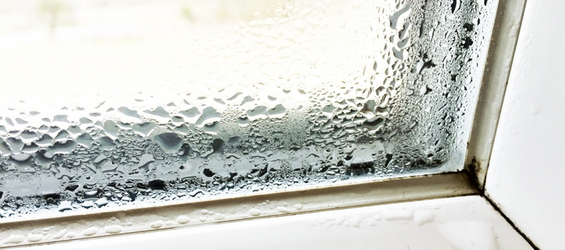 Bad und Dusche unter Schimmelbefall – was tun?