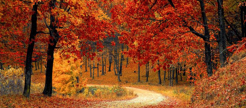 Herbstzeit ist Schimmelzeit